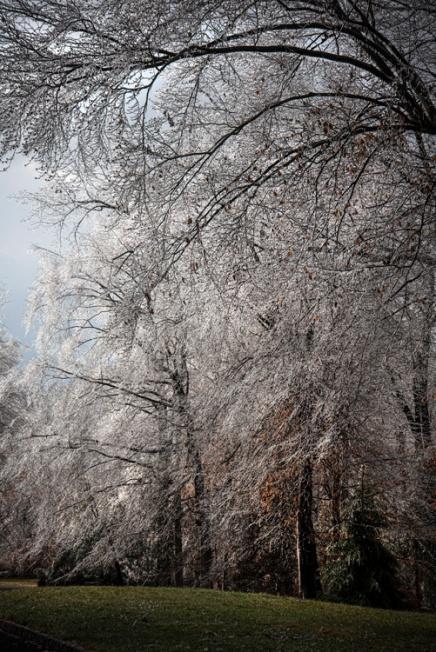 Ice Trees1667
