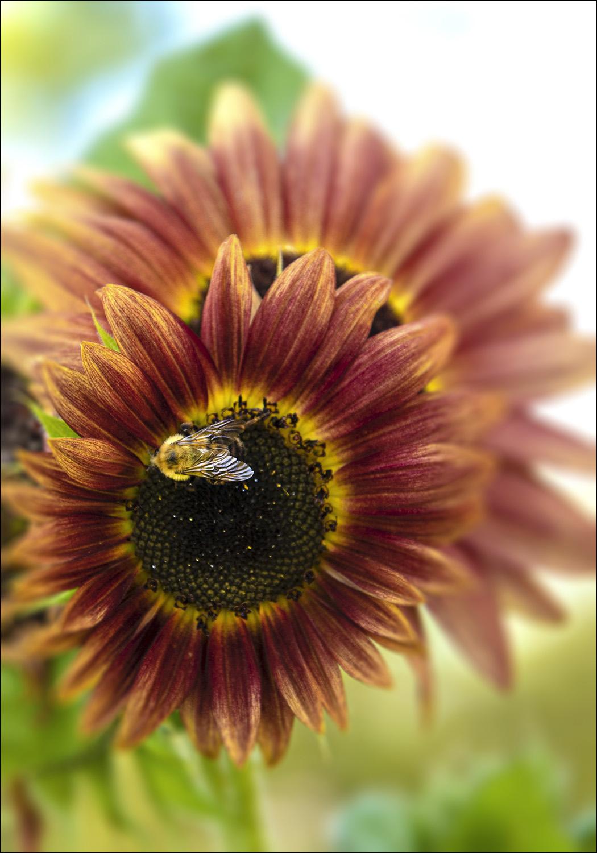Flower&Bee_4891